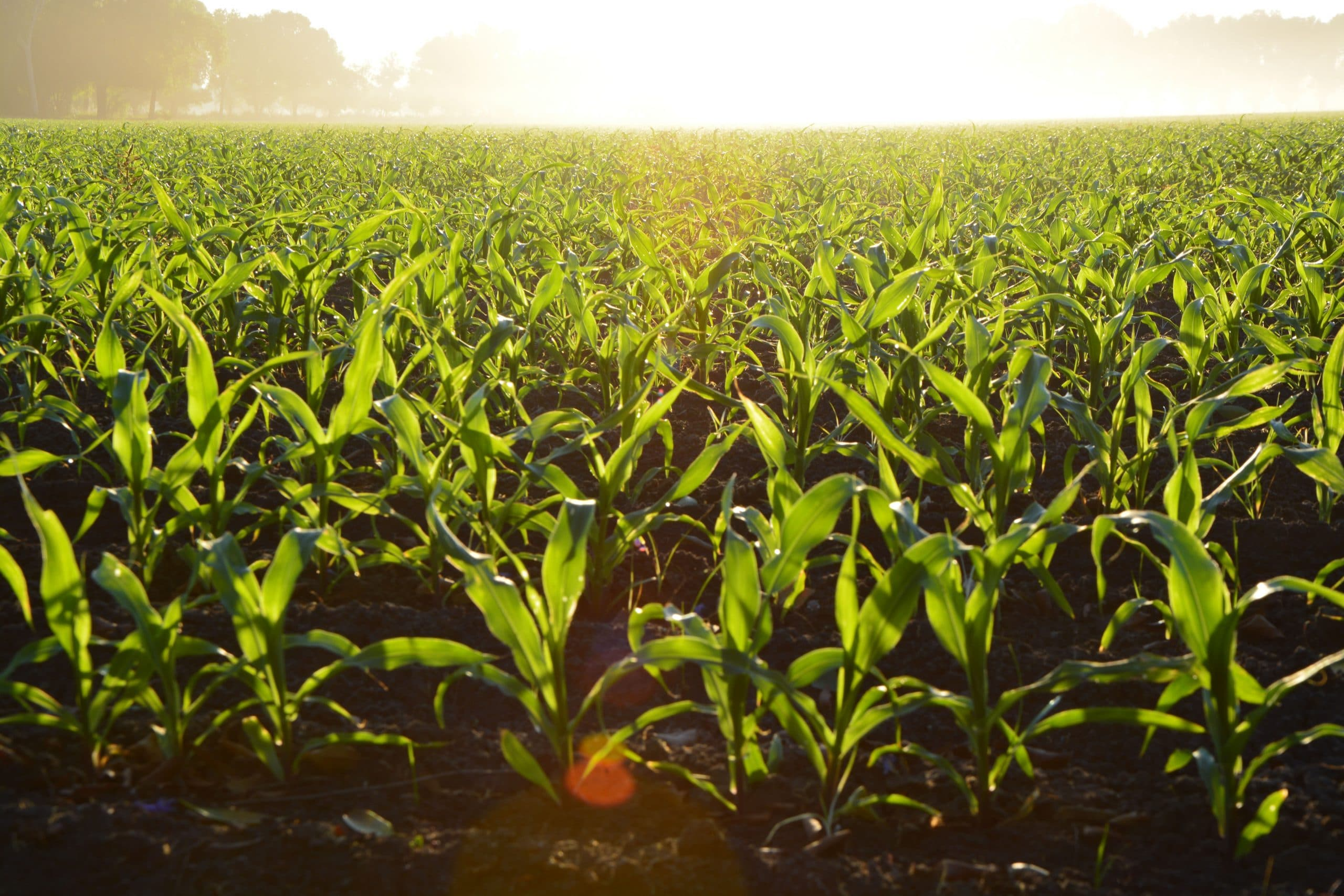 RREUSE responds to a Roadmap, the Farm to Fork Initiative, a  strategy for sustainable food